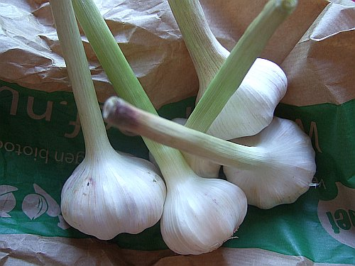 new-garlic