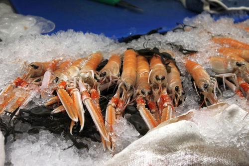 dublin bay prawns small